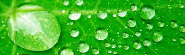Wate drops on leaf